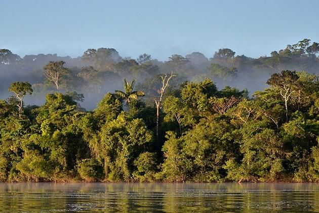 Brasil tem 50 milhões de hectares 'vazios' para replantar árvores, diz estudo