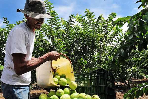 Com quarentena, agricultores familiares já enfrentam dificuldades para vender produção
