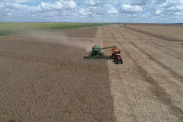 Planejamento, clima e tempo curto: como está a colheita da soja em MS
