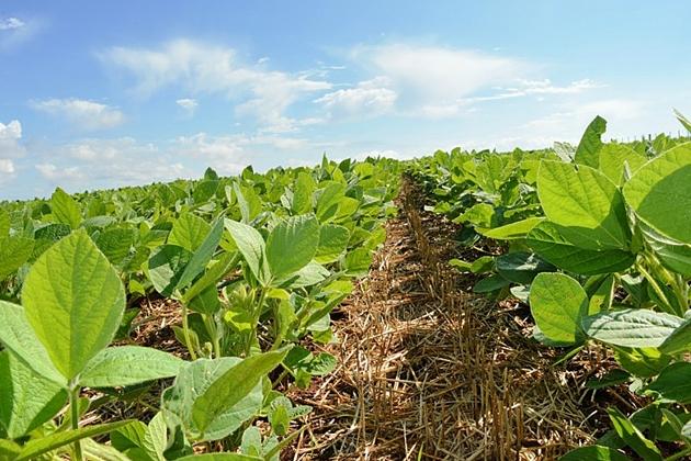 Produtores rurais têm ate o dia 10 de janeiro para registro da área de soja
