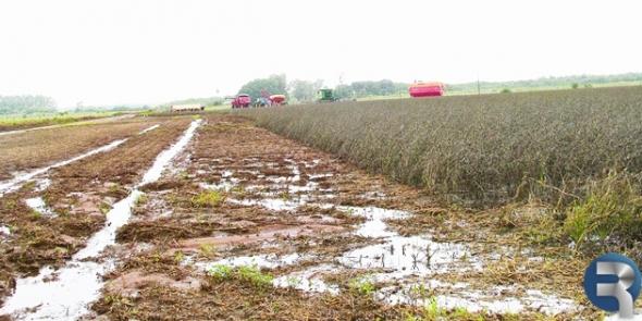 Em quatro polos agrícolas, prejuízo supera R$ 500 milhões