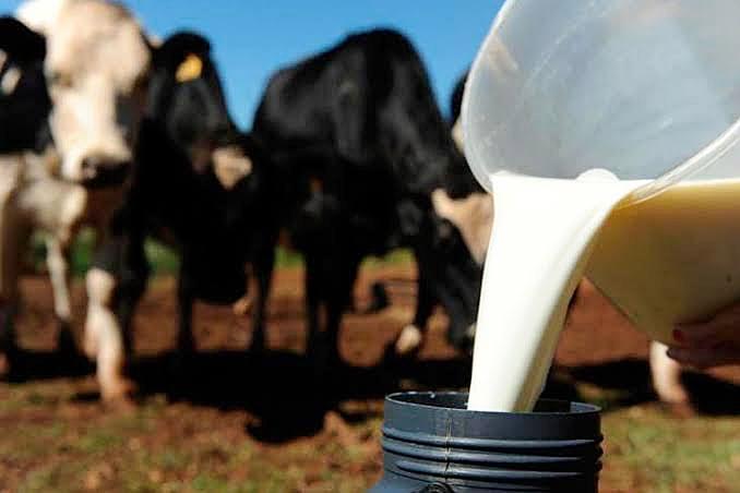 Produção leiteira cai 71% e assentado troca gado por arrendamento para soja