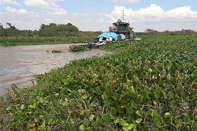 Imasul deve remover vegetação aquática acumulada no Rio Negrinho