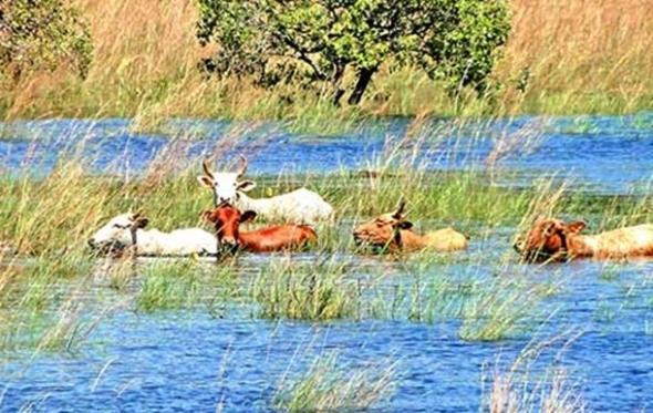 Cheia no Pantanal pode provocar reação em cadeia e causar calamidade