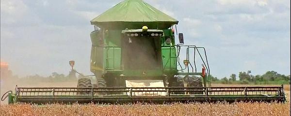 Com chuva na hora certa, produtores iniciam colheita otimistas que terão supersafra