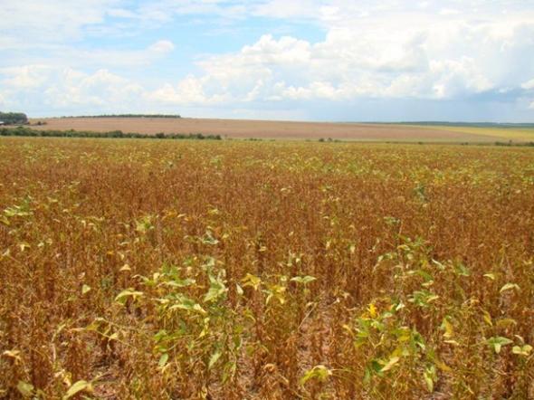 Chuvas já causam prejuízos financeiros nas lavouras de Sidrolândia