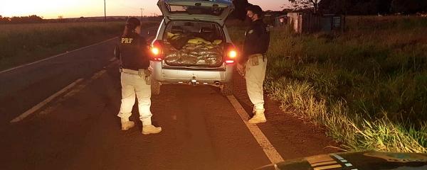 Após tentativa de fuga e perseguição, PRF apreende 381,6 quilos de maconha e skank em Sidrolândia