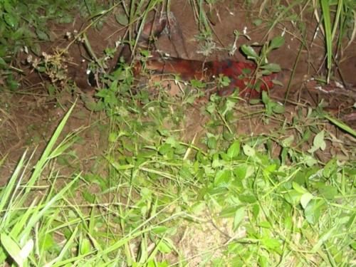 Braçal desaparecido é encontrado morto em valeta na fazenda