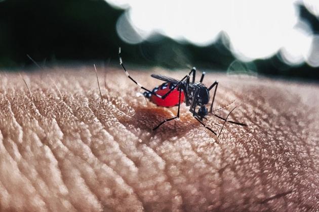 Brasil tem mais de 30 mil casos notificados de dengue nas primeiras semanas de 2020