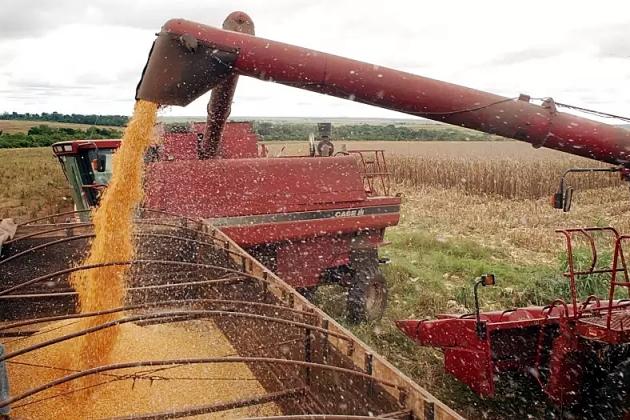 Colheita do milho safrinha começa em MS e produção pode ficar 32% menor