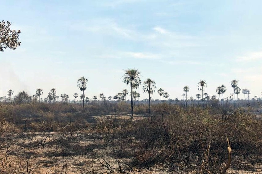 Queimada no Pantanal de MS já destruiu área equivalente à cidade do Rio de Janeiro