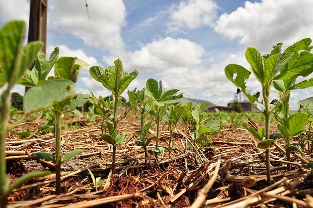 Agricultura ocupa espaço da pecuária e chega a 5,4 milhões de hectares