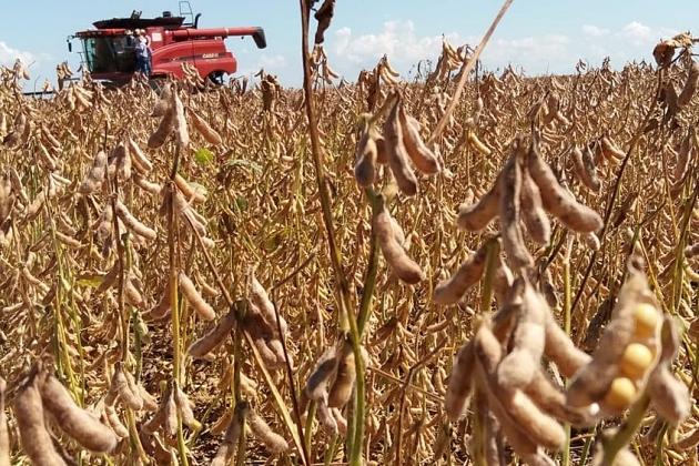 Em MS, produtores fazem manutenção nas lavouras e aguardam chuva para ter sucesso na safra 2020 da soja