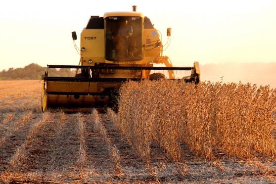 Iagro prorroga prazo para cadastro de área de plantio de soja
