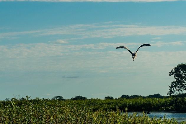 Projetos de lei e 121 hidrelétricas previstas ameaçam a biodiversidade no Pantanal