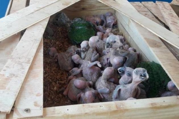 Tráfico de animais aumenta e 6 são presos por contrabando de 180 aves