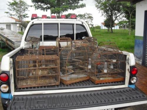 Criador de passarinhos leva multa de R$ 8 mil