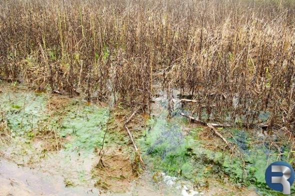 Chuvas podem fazer Sidrolândia perder 135 mil toneladas de soja