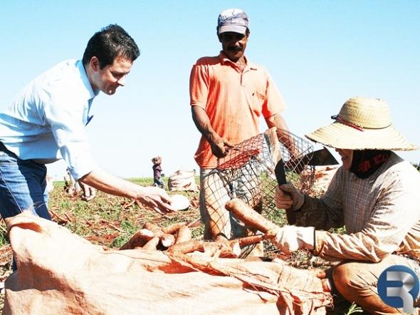 Fábrica de farinha de mandioca será instalada em Ivinhema