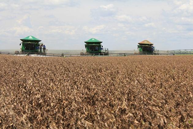 Agropecuária pode levar MS ao 3º maior crescimento do País em 2020