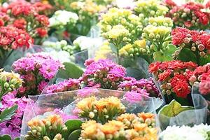 Brizolão vai receber de sexta a domingo exposição de flores e plantas de Holambra
