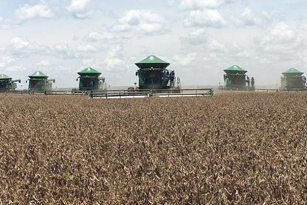 MS produzirá safra total recorde acima de 20 milhões de toneladas de grãos