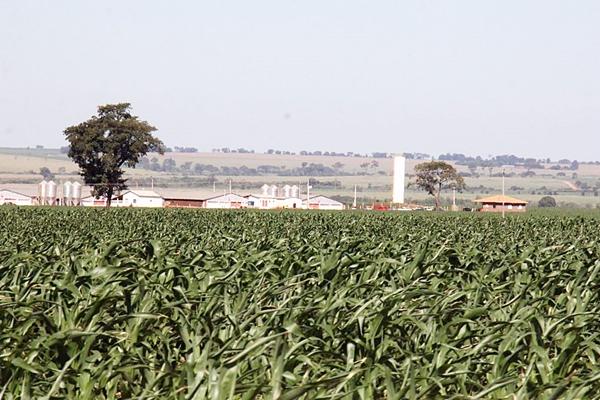 Agropecuária de Mato Grosso do Sul e Mato Grosso mantém força e segura crescimento do PIB