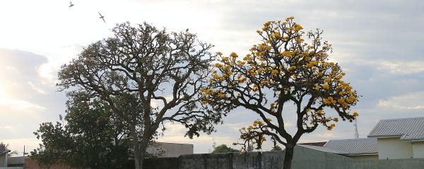 Apesar de manhã nublada, previsão é de sol à tarde em Sidrolândia