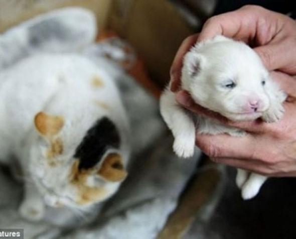 Gata também pula cerca e dá à luz um cachorro