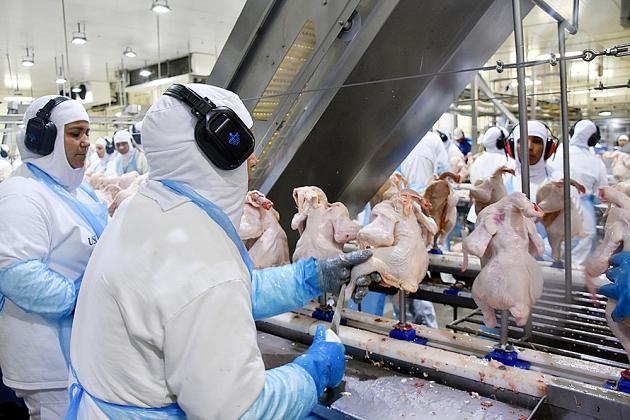 Celulose e carnes alavancam exportação da indústria de Mato Grosso do Sul em 2019