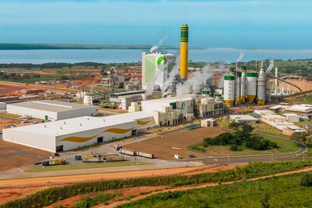 MS será responsável por 33% da celulose produzida no País