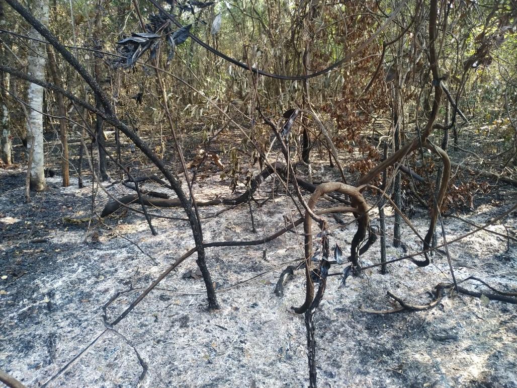 Idosa leva multa por incêndio em área de 95 hectares de vegetação nativa