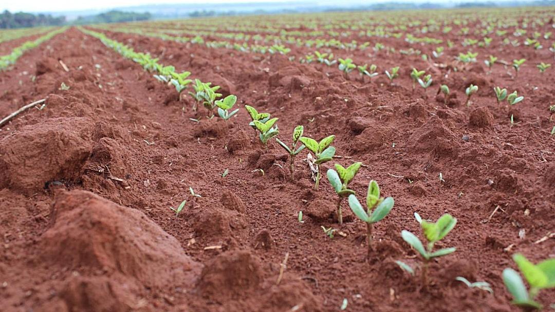 Agricultores de MS tem até 31 de dezembro para terminar plantio e devem registrar área na Iagro
