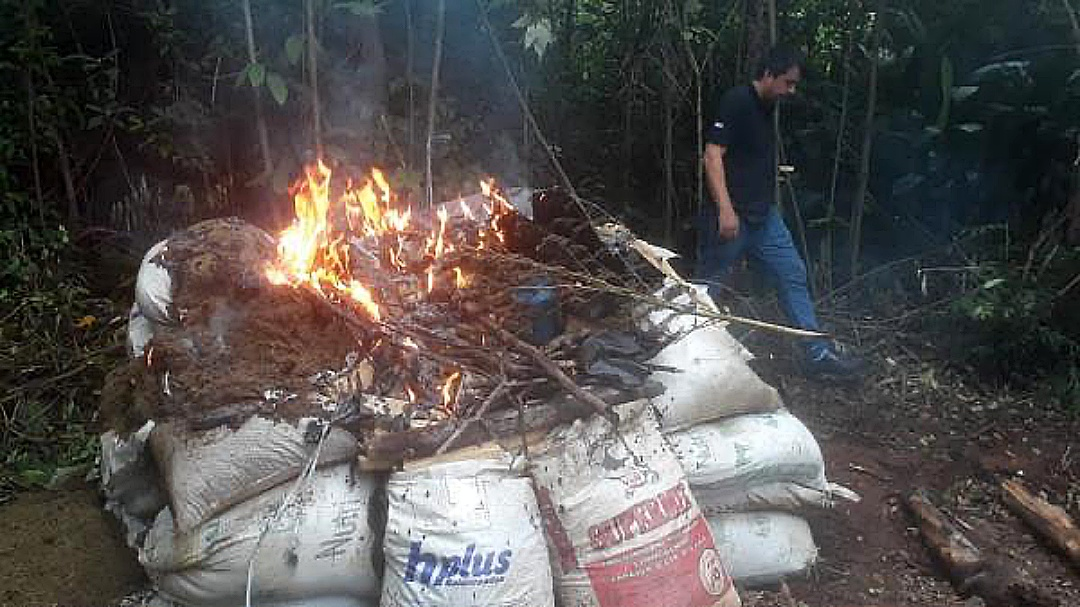 Traficantes usavam reserva florestal para produção de 5,5 toneladas de maconha