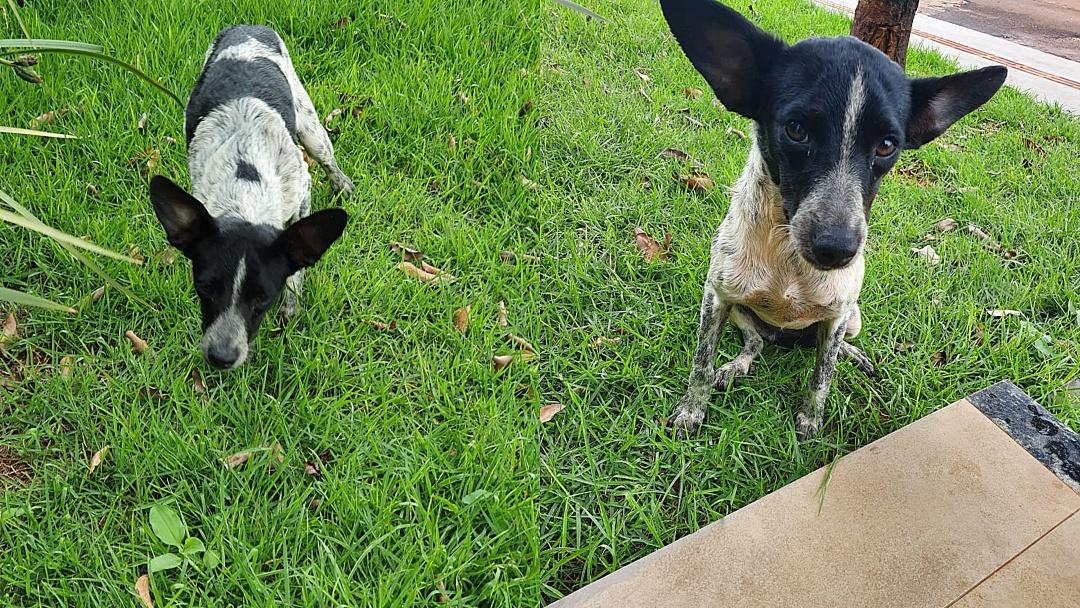 Procura-se dono de cachorro perdido na Rua Espírito Santo