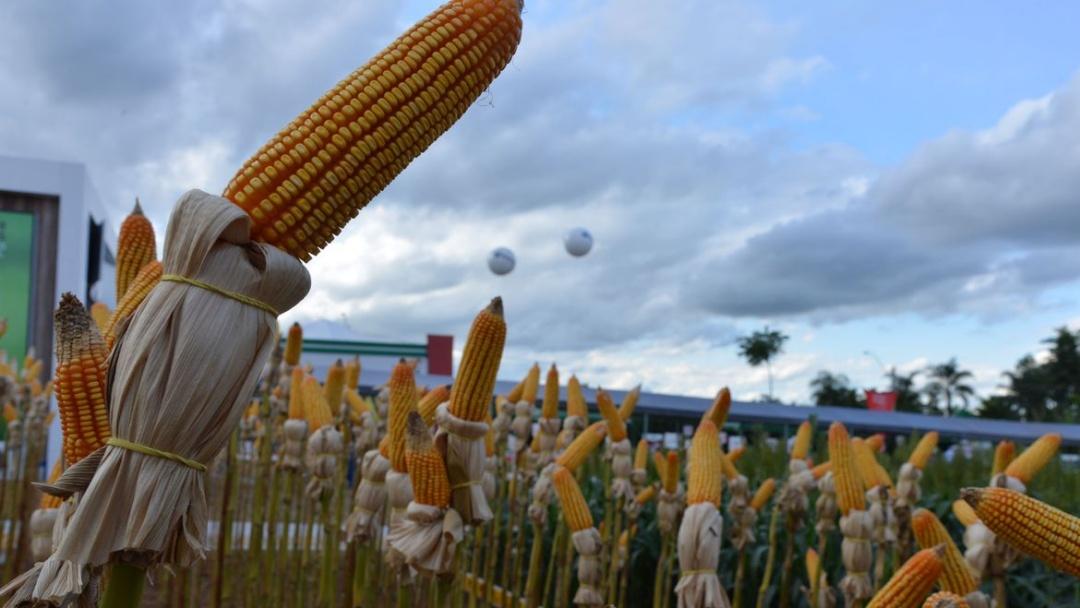 Programa Crédito Rural financia agropecuária com R$ 1,7 bilhão em 2020