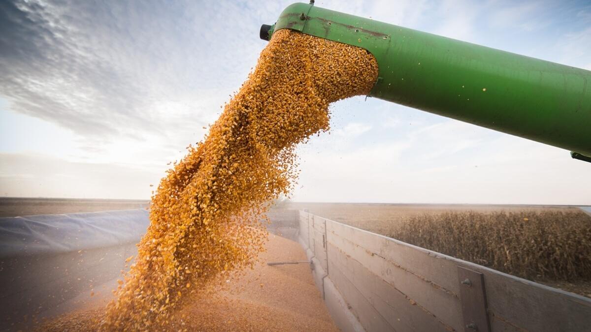 Política agrícola do MS garante a expansão da área de soja em 44%