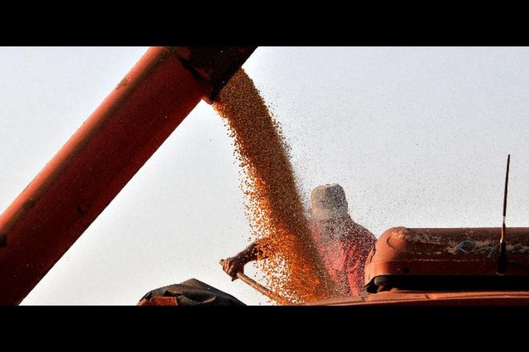 Exportações de milho em grão triplicam em 2021