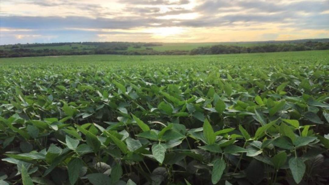 Sul-Fronteira é destaque no manejo biológico da soja