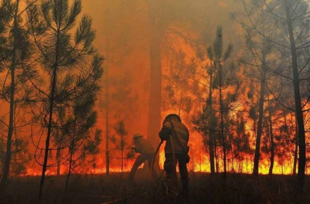 Ainda não recuperado, Pantanal corre risco de incêndios piores neste inverno