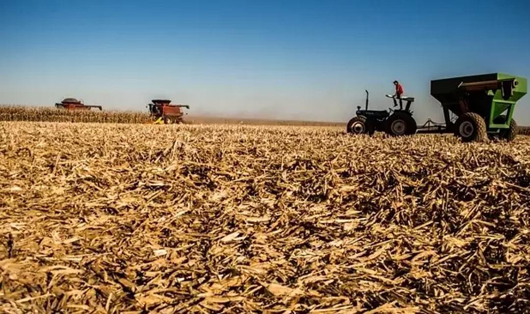Clima prejudica plantações e colheita é 40% menor